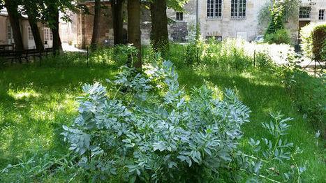 Le zoom de la rédaction : La ville de Paris veut mettre du vert à tous les étages | Toitures végétales & Biodiversité urbaine | Scoop.it