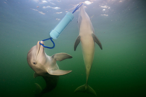 "Dolphins have a language that helps them solve problems together | ""You Shall Not Pass"" 