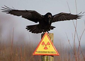Fukushima : dernières nouvelles de septembre   Fukushima Over Blog   Japon : séisme, tsunami & conséquences   Scoop.it