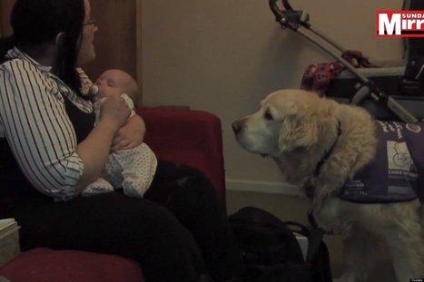 Service Dog Helps Mom Change Diapers   Animals100   Scoop.it