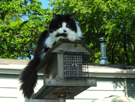 The Cat that Ate the Canary | Life Harmony | Scoop.it