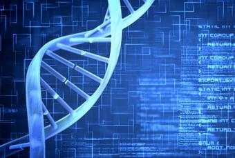 Les nucléases, de fabuleux outils pour la chirurgie du génome : les ... - bulletins-electroniques.com | genome editing | Scoop.it