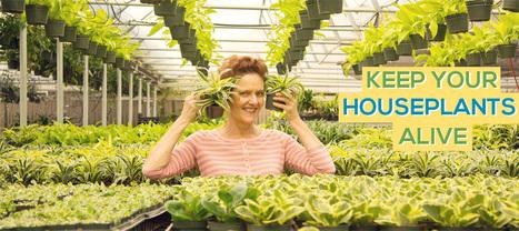 KEEP YOUR HOUSEPLANTS ALIVE -   Annie Haven   Haven Brand   Scoop.it