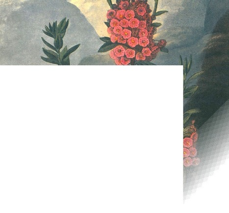 1613夜『植物は〈知性〉をもっている』ステファノ・マンクーゾ&アレッサンドラ・ヴィオラ|松岡正剛の千夜千冊 | Ayahuasca  アヤワスカ | Scoop.it