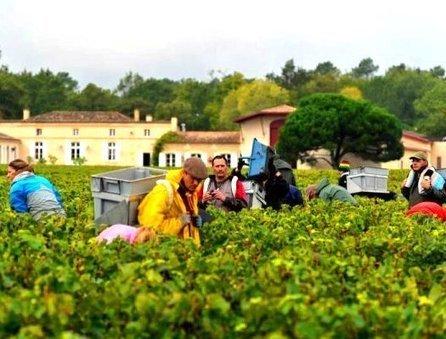2012 Domaine de Chevalier has Late Harvest, Olivier Bernard Interview | Vitabella Wine Daily Gossip | Scoop.it