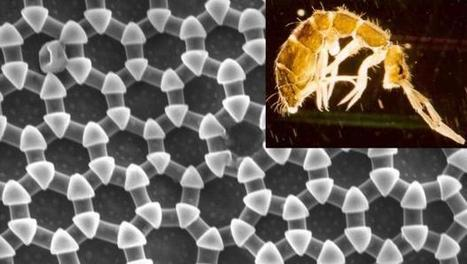 Springtails Inspire Great Leap in Super Materials | Biomimicry | Scoop.it