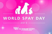 Bunny's Blog: World Spay Day Pet Pageant | Pet News | Scoop.it