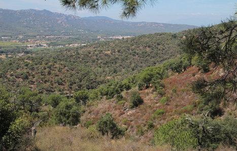 38 hectàrees de les Gavarres a cost zero per preservar el paisatge de Castell d'Aro | #territori | Scoop.it