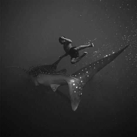 Black and White Underwater Photography by Hengki Koentjoro   interests   Scoop.it