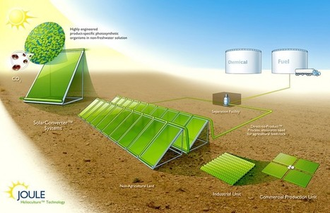 New Biofuel technology using sunlight and micro-organisms | Sustainable Technologies | Scoop.it