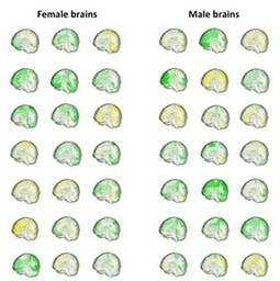 Men are from Mars, women are from Venus? New brain study says not | Emotional Design | Scoop.it