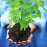 RHS offers funding to encourage sustainable gardening | Mowdirect Blog | Wellington Aquaponics | Scoop.it