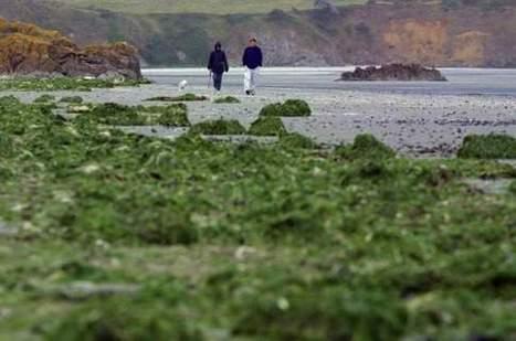 Algues vertes: la pollution déborde largement de la Bretagne | Toxique, soyons vigilant ! | Scoop.it
