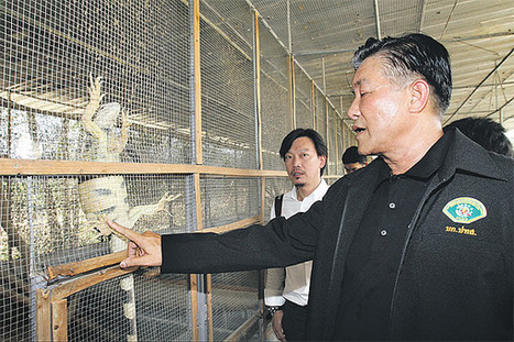 Recent wildlife seizures open lid on burgeoning industry | Bangkok Post: news | Wildlife Trafficking: Who Does it? Allows it? | Scoop.it