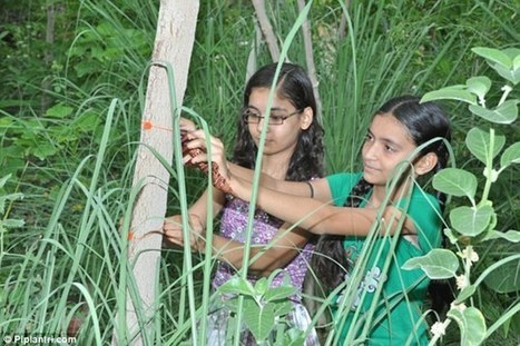 Village in India plants 111 fruit trees for every baby girl | Eco-feminism & the Ecology of Fear | Scoop.it