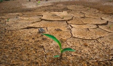 Los programas mundiales para el Cambio Climático, el reto de la Igualdad. Caso de REDD | Genera Igualdad | Scoop.it