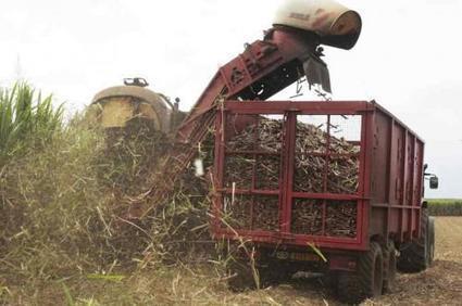 Le Cameroun envisage de produire 37 MW d'énergie grâce à la biomasse, sur 37 sites identifiés - Agence Ecofin | Salon Bois Energie du 12 au 22 mars 2015 à Nantes | Scoop.it