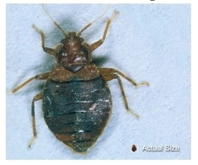 Health Department will address growing bedbug problem in Helena - KXLH Helena News | Bed Bugs | Scoop.it
