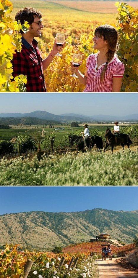 Wine-tasting honeymoons | Actualité de l'emploi et de la formation | Scoop.it