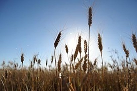 Feeding the world's population getting tougher as climate changes, other threats mount | Sustain Our Earth | Scoop.it