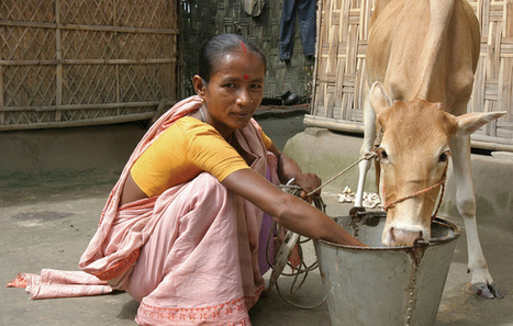 How microfinance disappointed the developing world | UNIT 4 | Scoop.it