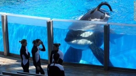 Should SeaWorld free the killer whales? - CNN (blog) | GT Tech Challenge | Scoop.it