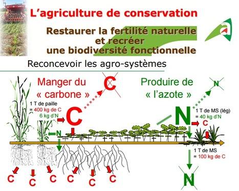 L'agriculture de conservation en Lorraine (1) | agriculture de conservation | Scoop.it
