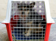 Pet Deaths In Airplanes Continue, Pressuring Airlines To Change Policy - Huffington Post | Pet Sitter Picks | Scoop.it