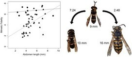 Ecological and Evolutionary Processes Drive the Origin and Maintenance of Imperfect Mimicry | Social Foraging | Scoop.it
