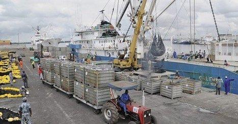Afrique de l'Ouest : les rouages de la pêche illégale passés au crible - JeuneAfrique.com | Confidences Canopéennes | Scoop.it