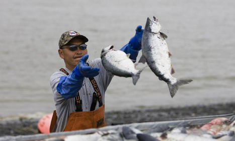 Arctic | Places | WWF | artic wildlife conservation | Scoop.it