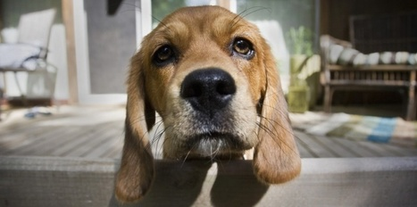 Propriétaires de chien, gare aux chenilles processionnaires | Toxique, soyons vigilant ! | Scoop.it