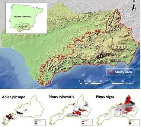 Desarrollan un mapa digital que predice las especies vegetales más adecuadas para reforestar zonas de alta montaña | Actualidad forestal cerca de ti | Scoop.it