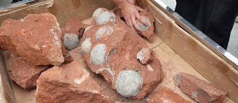 Chine : des dizaines d'oeufs de dinosaures retrouvés sur un chantier | Merveilles - Marvels | Scoop.it