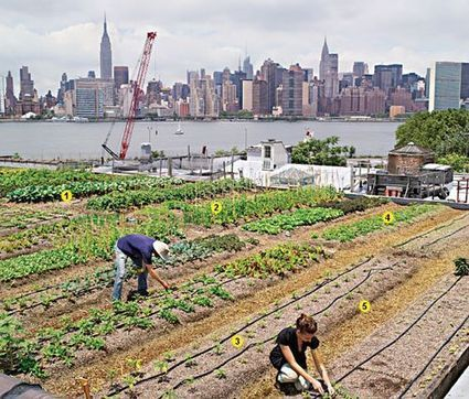 Try This Green(point) Roof on for Size | Brownstoner | Vertical Farm - Food Factory | Scoop.it