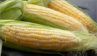 Nigeria: First Vitamin A-rich, Open-pollinated Maize Varieties Released | MAIZE | Scoop.it