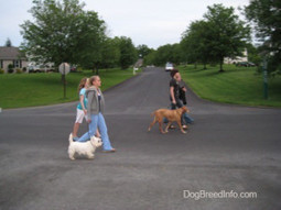 The Walk - Passing Other Dogs | Shih Tzu & Furbabies | Scoop.it