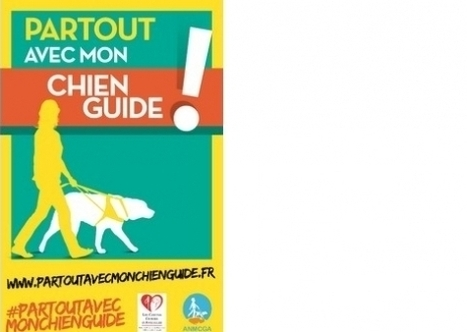 Chiens guides: cessons d'être aveugles | 16s3d: Bestioles, opinions & pétitions | Scoop.it