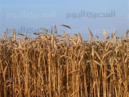 Cut hunger by half in MENA by 2015, says UN group | Food Situation - globally | Scoop.it