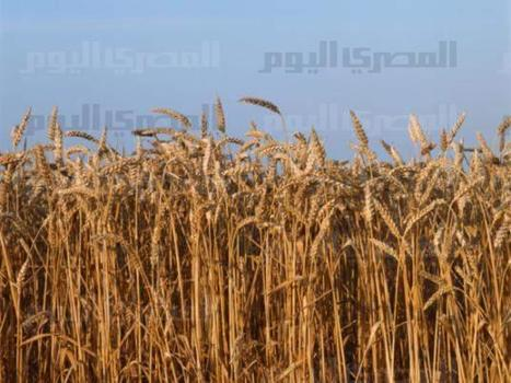 Cut hunger by half in MENA by 2015, says UN group | Food Security | Scoop.it