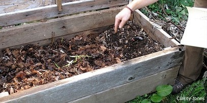 Composting with Worms - National Wildlife Federation | Permaculture, Homesteading & Green Technology | Scoop.it