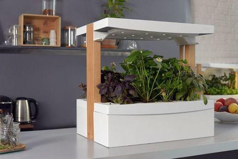Fresh Square, le potager d'intérieur qui veut révolutionner la consommation de fruits et légumes frais à domicile   Les nouvelles cultures de l'alimentaire   Scoop.it