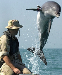 Should dolphins be used to detect underwater mines? - Your Community   Dolphins   Scoop.it