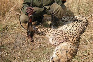 Fear of Ecological Collapse in Southern Africa   Wildlife Trafficking: Who Does it? Allows it?   Scoop.it