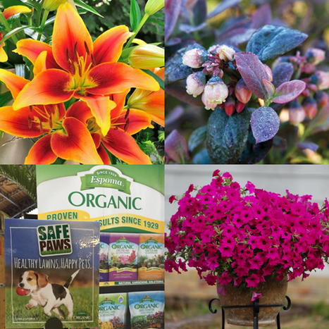 Garden Media Group Premieres New Vibrant Garden Plants & Products for Spring 2015 | Garden Media Group | Scoop.it