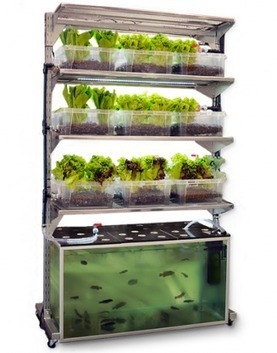 3 Gorgeous Vertical Gardens | greenUPGRADER | Wellington Aquaponics | Scoop.it