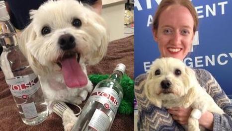 Salvano un cane grazie alla vodka | Benessere animale | Scoop.it