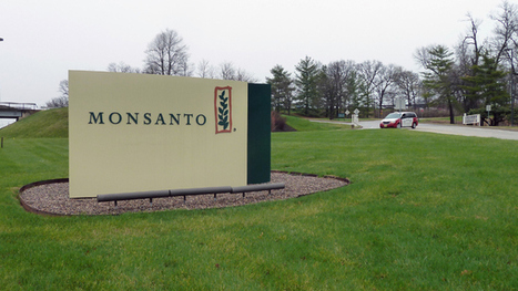 US requires El Salvador to buy Monsanto's GMO seeds or no aid money | Let the EARTH provide! | Scoop.it