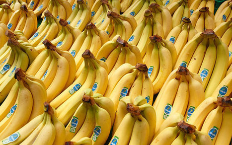The secret history of bananas, and what it tells us about climate change | World Environment Nature News | Scoop.it
