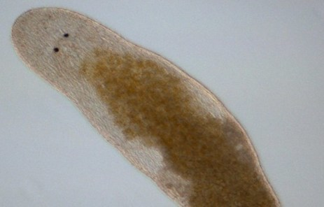 Featured Creature: Worms That Fertilize Their Own Heads | Quite Interesting News | Scoop.it